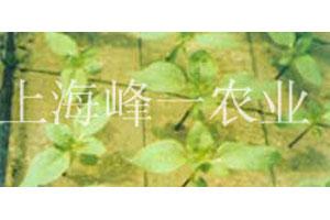 农业产品展示