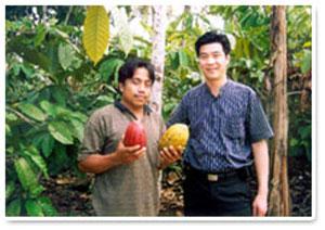 在印尼实际考察可可种植园