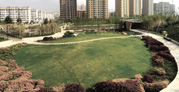青岛李村河景观