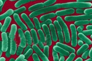 沙門氏菌(Salmonella spp.)多克隆抗體