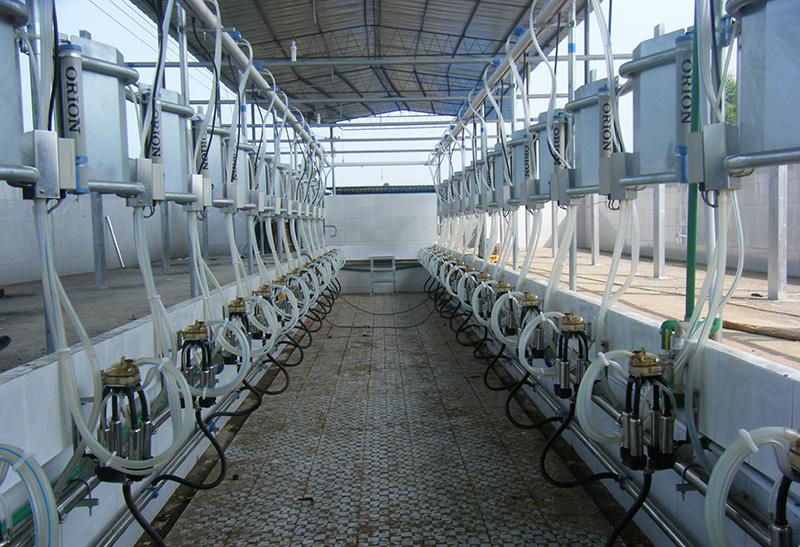 并列式挤奶设备